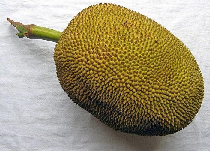 fruit du jacquier valeur nutritionnelle