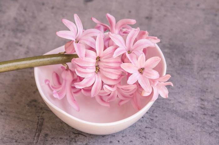 jacinthe en pot couleur rose