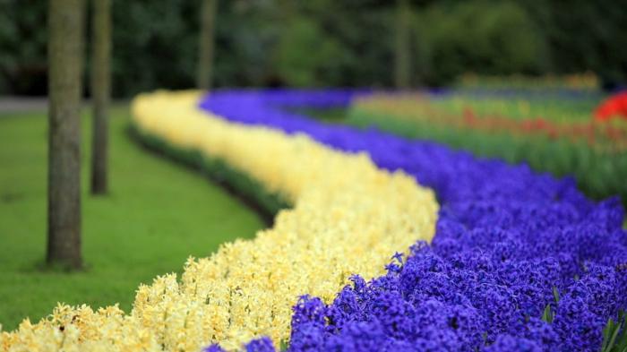 jacinthe en pot jardin
