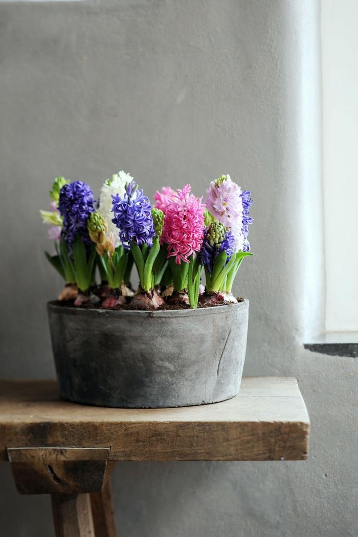 jacinthe en pot planté en groupes