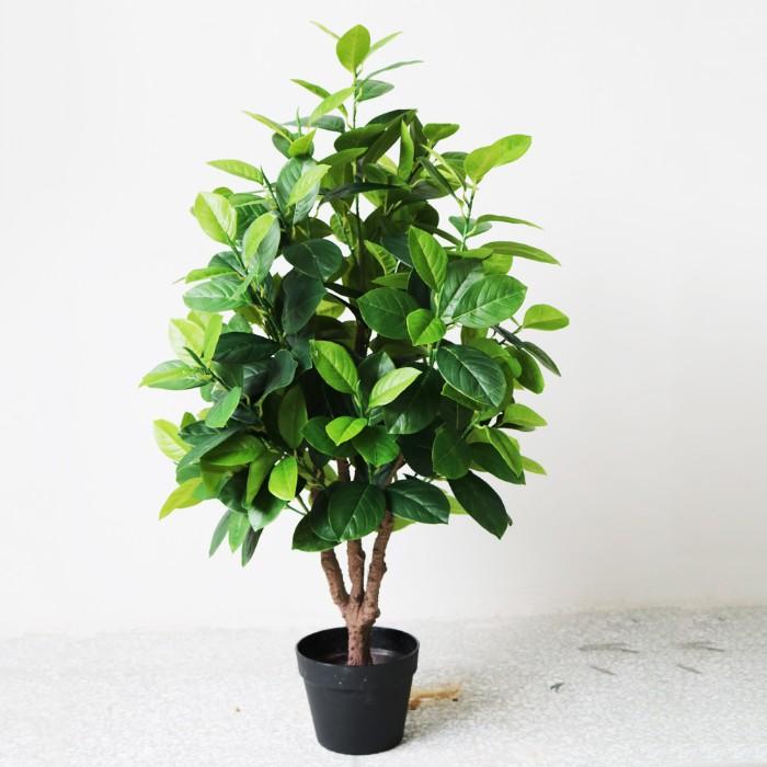 jeune arbre fruit du jacquier