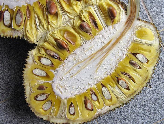 quelles sont les vertus du fruit du jacquier