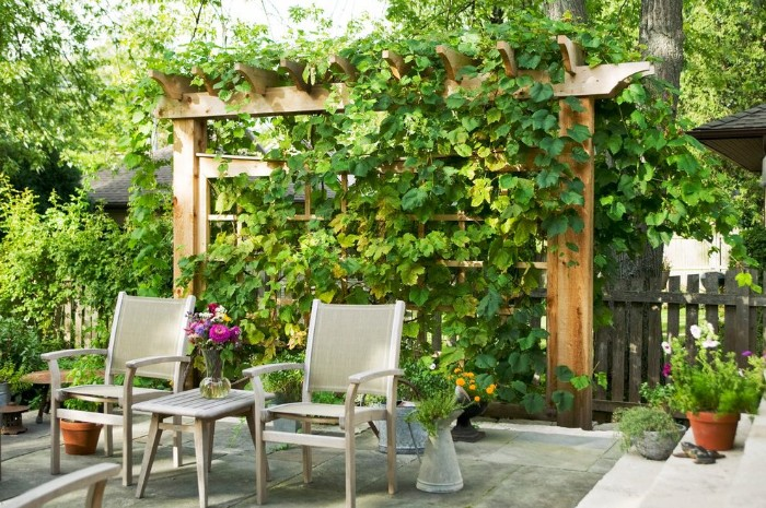 brise-vue jardin plantes et bois