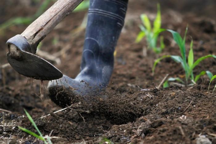entraînement avec des outils jardinage