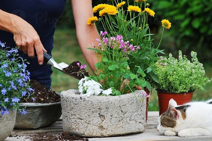 entraînement dans le jardin avec des outils jardinage