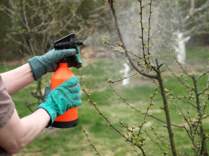 entraîner les épaules avec des outils jardinage