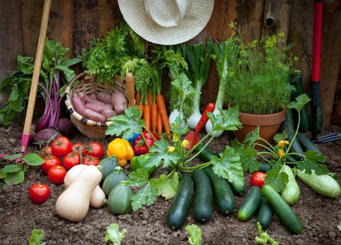 fitness dans votre jardin avec des outils jardinage