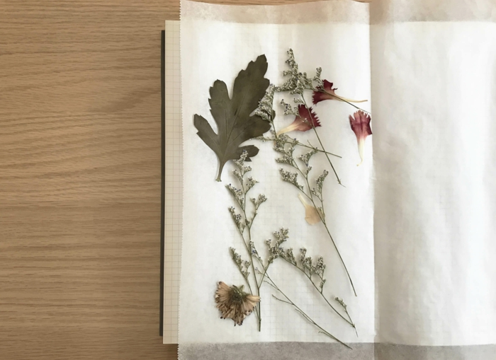 fleurs séchées faire un herbier