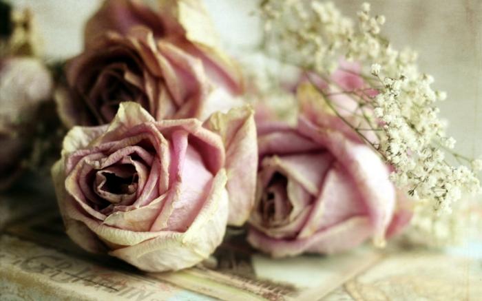 fleurs séchées roses et gypsophile