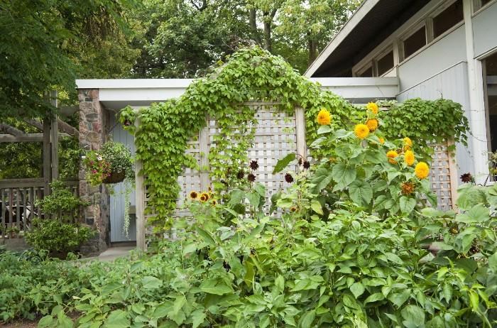 idée de brise-vue jardin bois et lierre