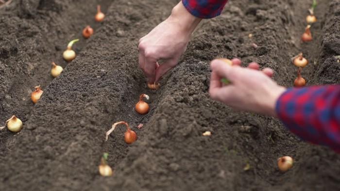 outils jardinage et fotness dans le jardin