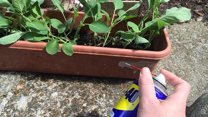 protéger plantes contre escargots dégrippant wd40