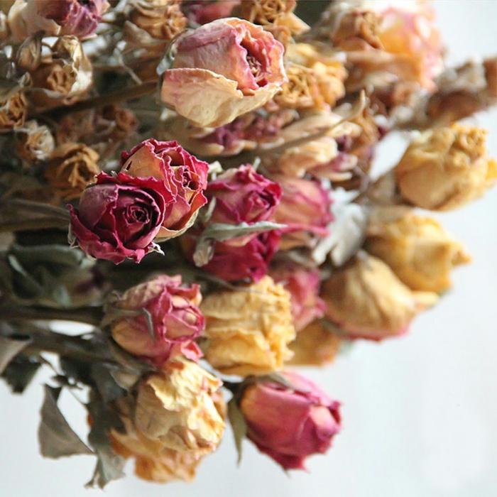 roses fleurs séchées