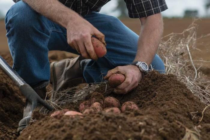 utiliser les outils jardinage pour exercer votre corps