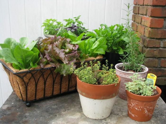 contenants pots potager balcon