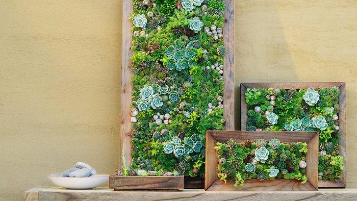 créer une déco avec des plantes succulentes et de la mousse végétale