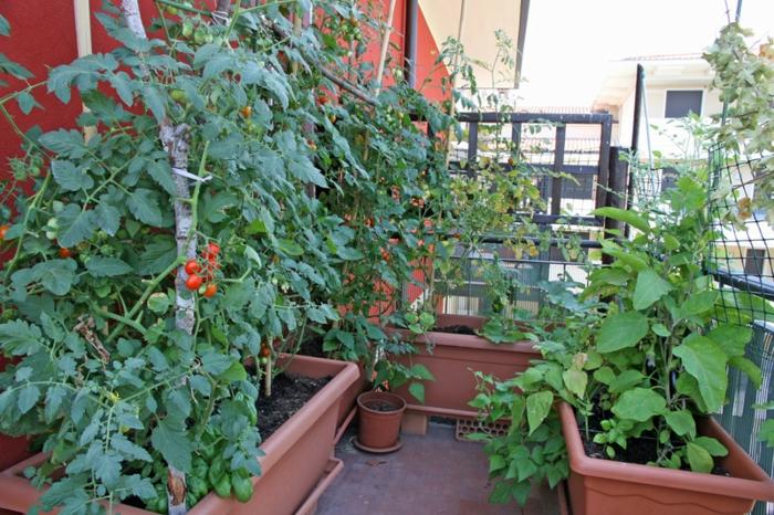 cultiver des légumes potager balcon
