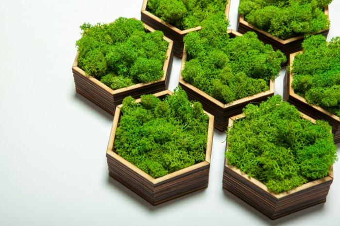 déco formes géométriques mousse végétale