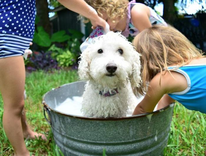 diy shampoing chien aux ingrédients naturels
