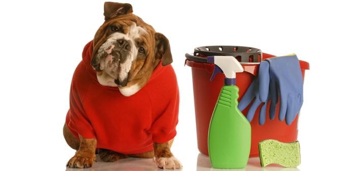 diy un shampoing chien naturel