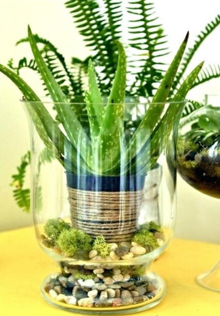 idée créative de déco avec plante d'aloe vera