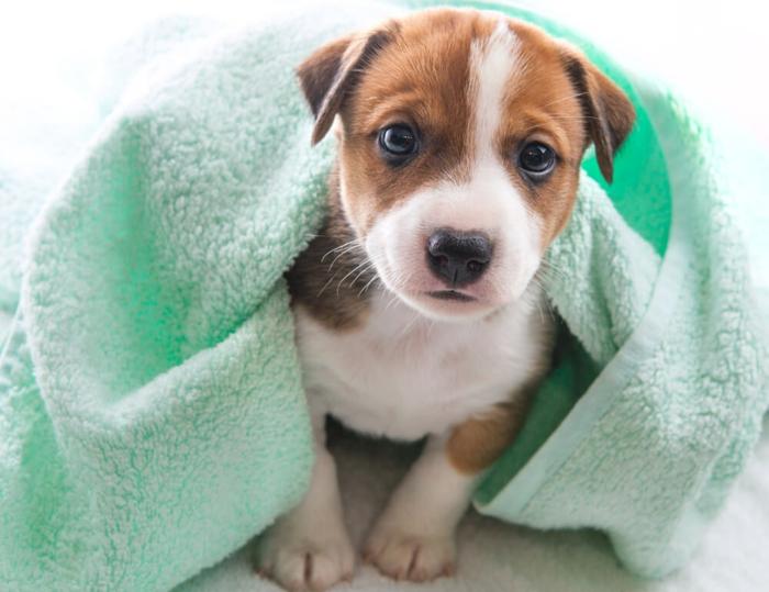 idée de recette shampoing chien