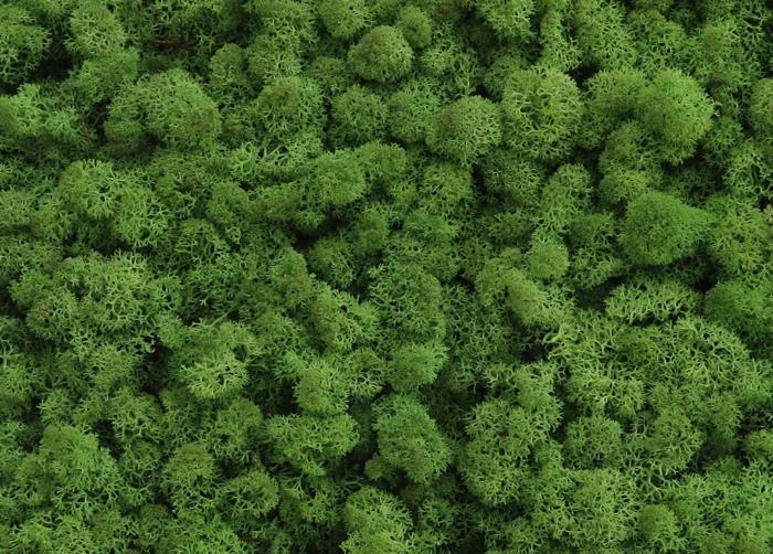 mousse végétale naturelle pour créer objets déco