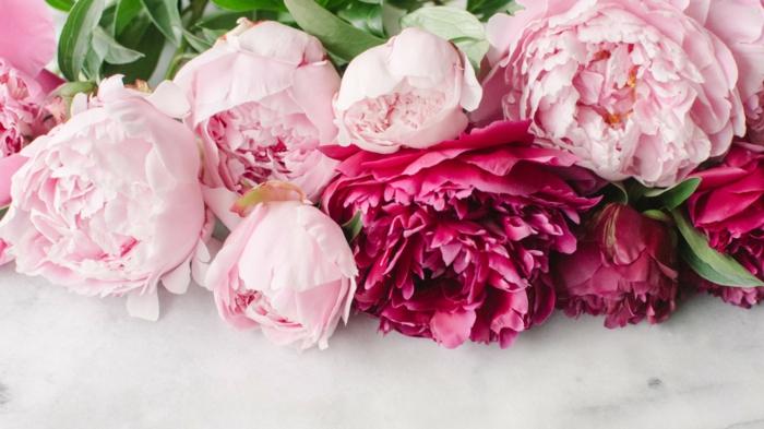 pivoine bouquets