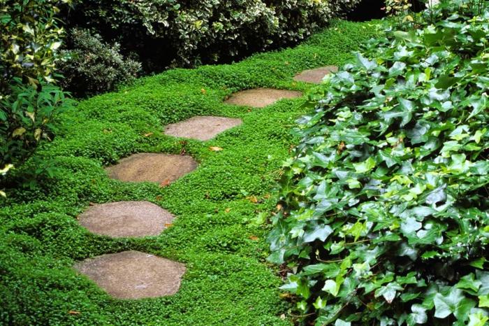 plante couvre-sol helxine ombre