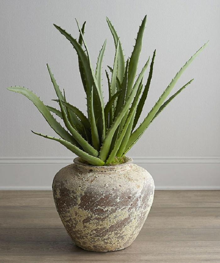 plante d'aloe vera élément déco
