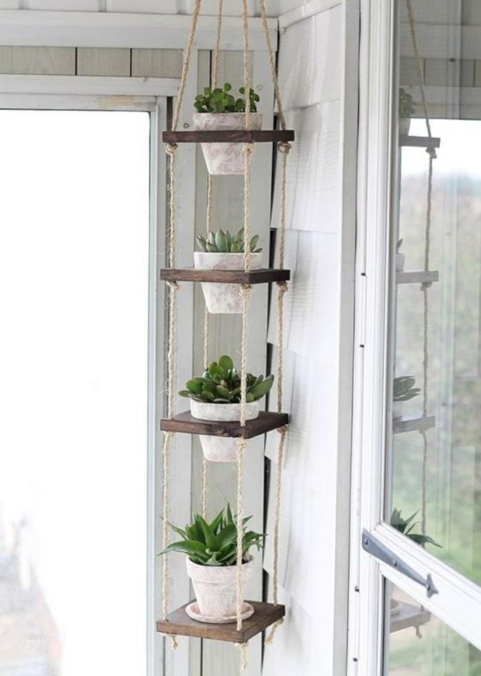 plante d'aloe vera étagère suspendue au plafond