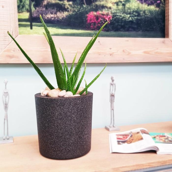 plante d'aloe vera cache-pot avec cailloux