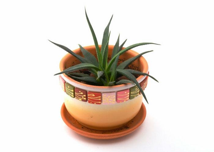 plante d'aloe vera cache-pot en céramique
