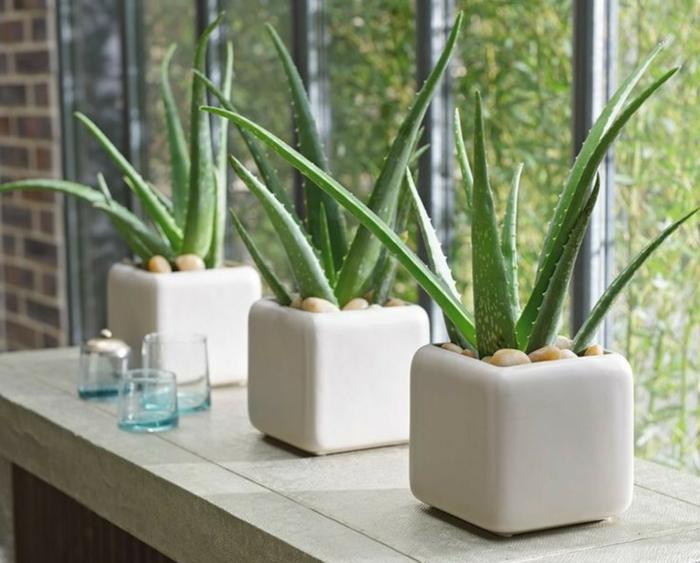 plante d'aloe vera cache-pot géométrique