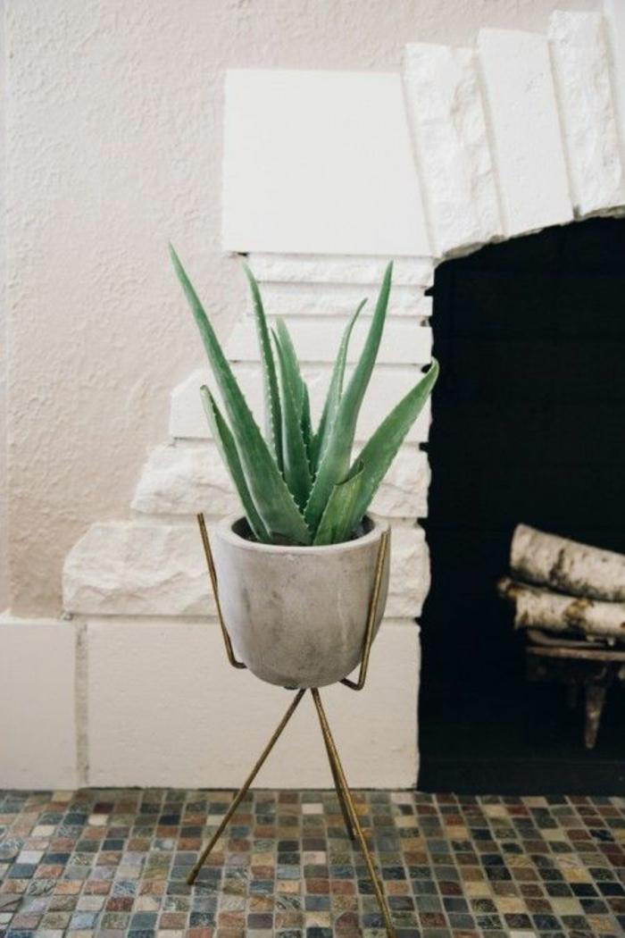 plante d'aloe vera cache-pot pierre support laiton