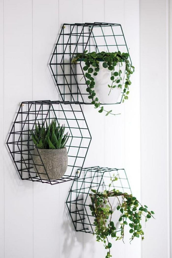 plante d'aloe vera cages métalliques sur le mur