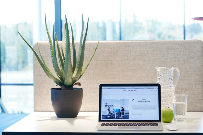 plante d'aloe vera coin bureau