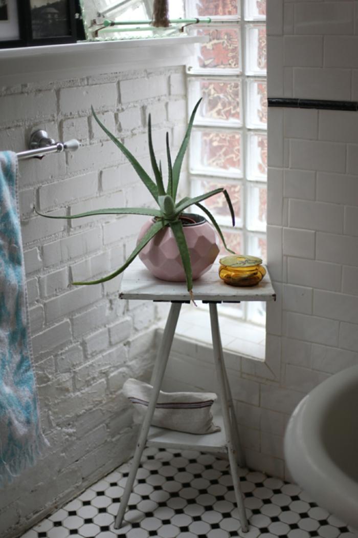 plante d'aloe vera salle de bains