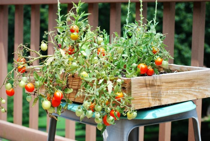 pot tomates cerises potager balcon