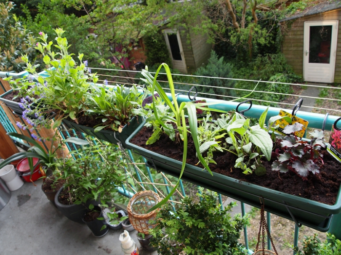 potager balcon pots de cultures