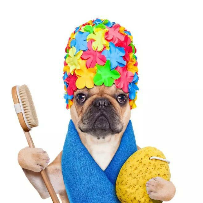 préparer shampoing chien maison