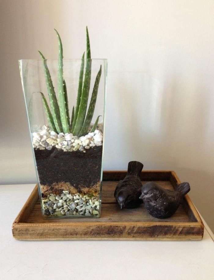 terrarium plante d'aloe vera