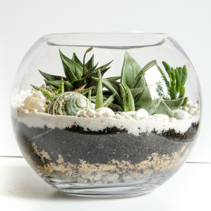 terrarium plantes succulentes plante d'aloe vera