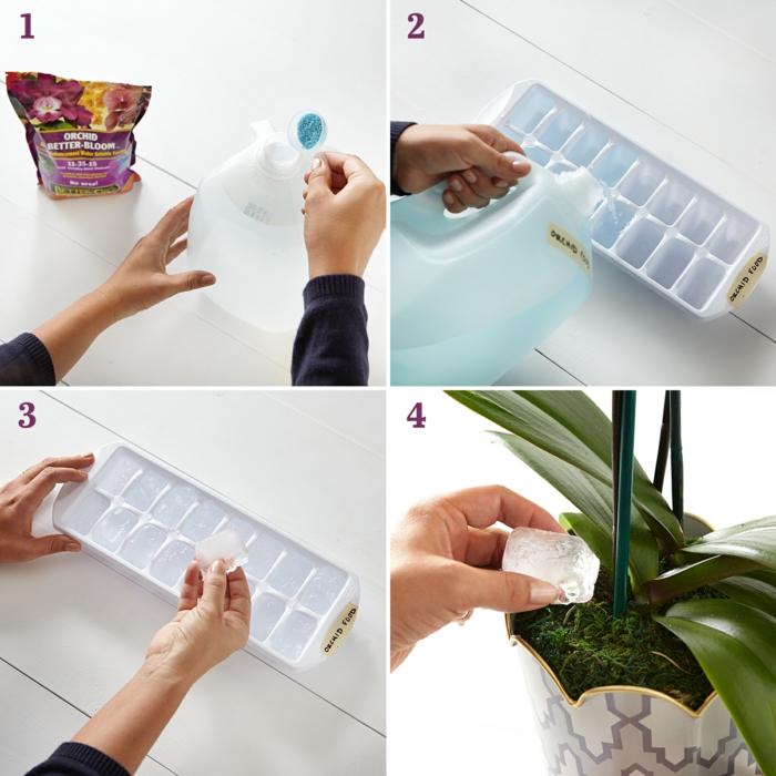 astuces pour votre orchidée