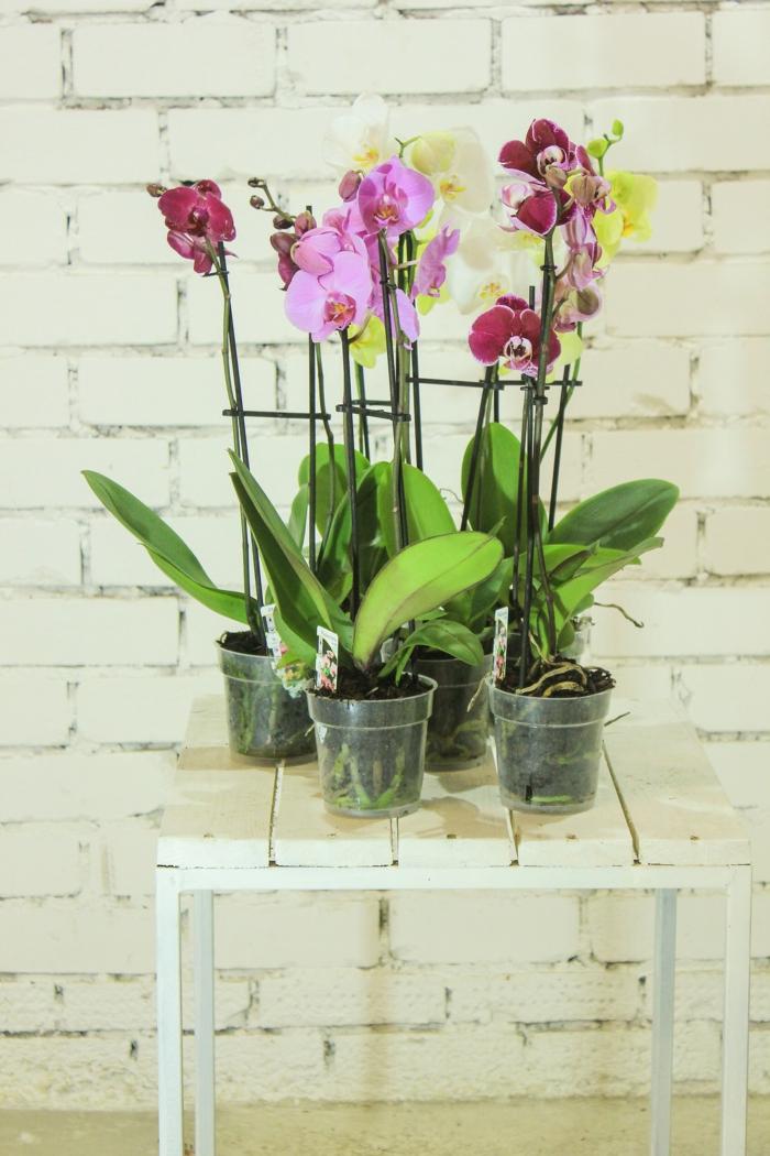 comment avoir une belle orchidée