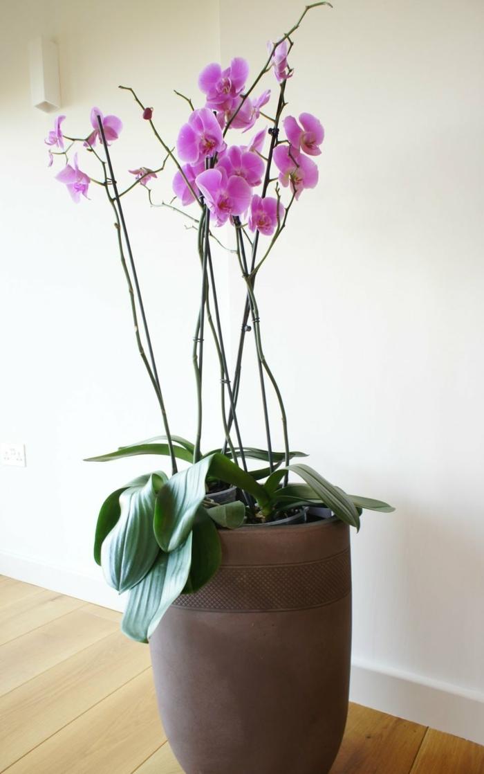 cultiver une orchidée