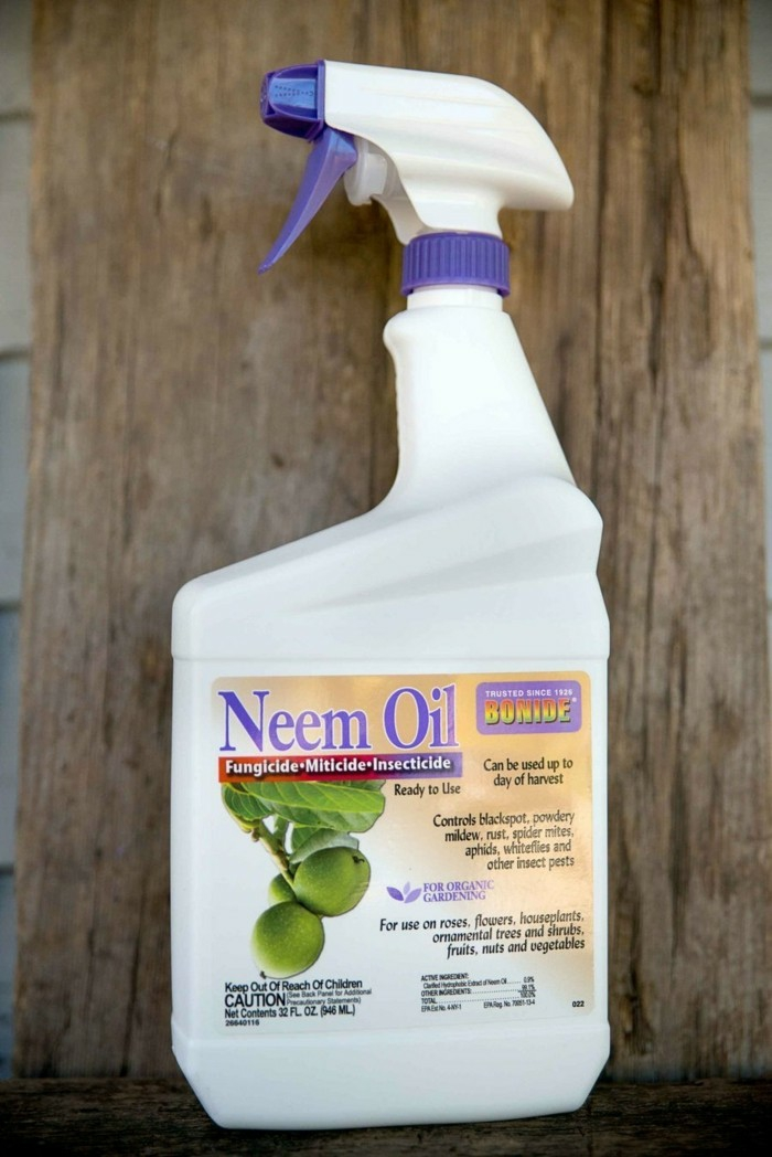 huile de neem anti-puceron naturel
