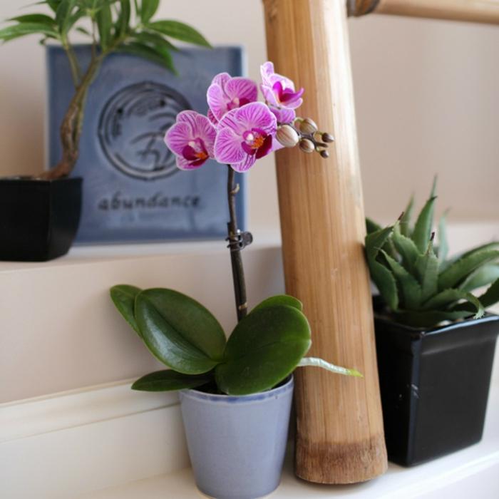idées comment cultiver orchidée