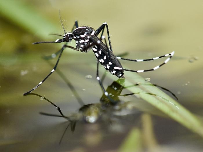 moustique tigre protection de santé
