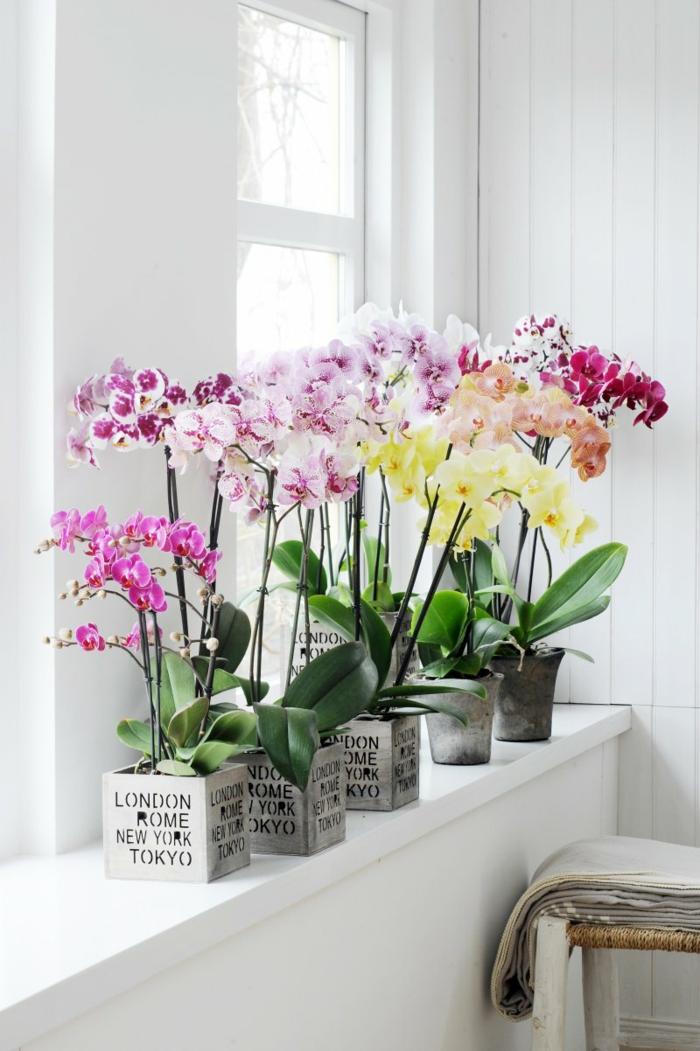 orchidée comment entretenir